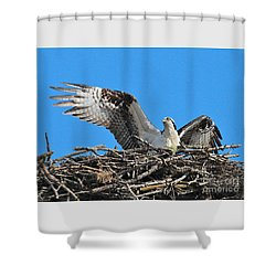Shower Curtain featuring the photograph Spread-winged Osprey  by Debbie Stahre