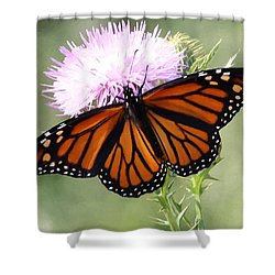 Spread Your Wings Shower Curtain by Anita Oakley
