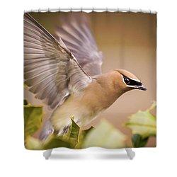 Spread Your Wings Cedar Waxwing  Shower Curtain