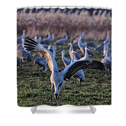 Spread Your Wings Shower Curtain by Shari Jardina