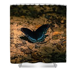 Shower Curtain featuring the photograph Spreadin My Wings by Brenda Bostic