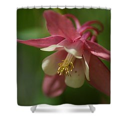 Shower Curtain featuring the photograph Spring 1 by Alex Grichenko