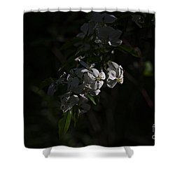 Shower Curtain featuring the photograph Spring 2016 10 by Cendrine Marrouat