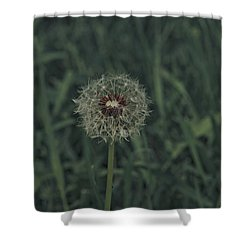 Shower Curtain featuring the photograph Spring 2016 18 by Cendrine Marrouat