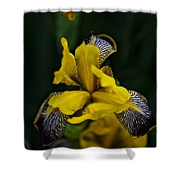 Shower Curtain featuring the photograph Spring 2016 19 by Cendrine Marrouat