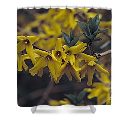 Shower Curtain featuring the photograph Spring 2016 8 by Cendrine Marrouat