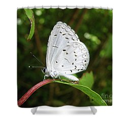 Spring Azure Butterfly Shower Curtain by Donna Brown