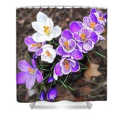 Spring Beauties Shower Curtain by Terri Harper