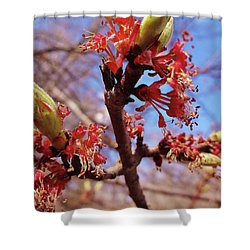 Spring Bloom #1 Shower Curtain by Jason Williamson