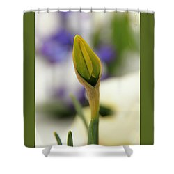 Shower Curtain featuring the photograph Spring Blooms In The Snow by Chris Berry