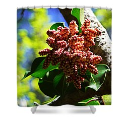 Spring Blossom 1 Shower Curtain by Xueling Zou