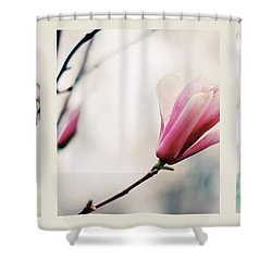 Shower Curtain featuring the photograph Spring Blossom Triptych by Jessica Jenney