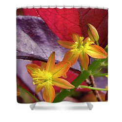 Spring Blossoms 2 Shower Curtain by Stephen Anderson