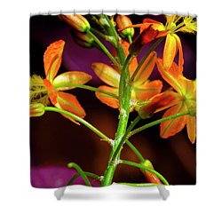 Spring Blossoms 3 Shower Curtain by Stephen Anderson