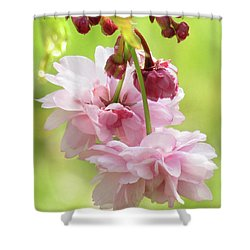 Spring Blossoms 8 Shower Curtain