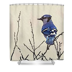 Shower Curtain featuring the digital art Spring Bluejay by Shelli Fitzpatrick