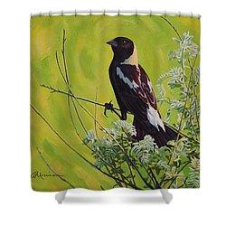 Spring Bobolink Shower Curtain by Bruce Morrison