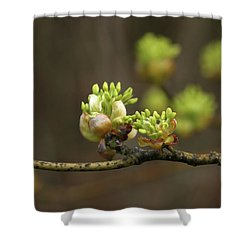 Spring Buds 9365 H_2 Shower Curtain