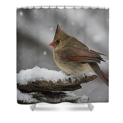 Spring Can't Come Too Soon. Shower Curtain