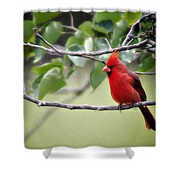 Spring Cardinal Shower Curtain by Lana Trussell