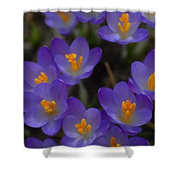Spring Charmers Shower Curtain