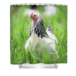 Spring Checken Shower Curtain