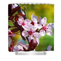 Spring Cheer Shower Curtain