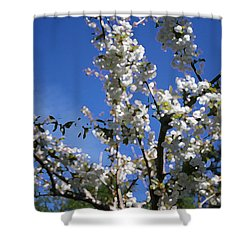 Spring Cherry Blossoms Shower Curtain by Mary Gaines