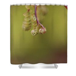 Shower Curtain featuring the photograph Spring Coming 2017 by Jeff Burgess