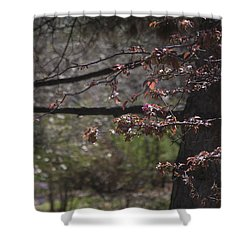 Spring Crabapple Shower Curtain by Morris  McClung