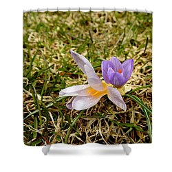 Spring Crocus Shower Curtain by Betty-Anne McDonald