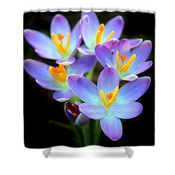 Shower Curtain featuring the photograph Spring Crocus by Jessica Jenney