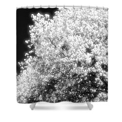 Spring Day In Barrie Ontario Canada 2017-05-15 Two  Shower Curtain by Lyle Crump