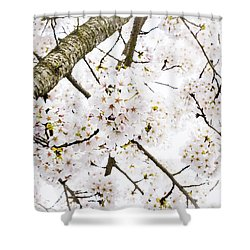 Spring Dogwood Blossoms Shower Curtain