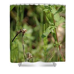 Shower Curtain featuring the photograph Spring Dragonfly by LeeAnn McLaneGoetz McLaneGoetzStudioLLCcom