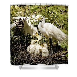 Shower Curtain featuring the photograph Spring Egret Chicks by Robert Frederick