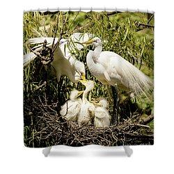 Spring Egret Chicks Shower Curtain by Robert Frederick