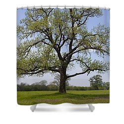 Spring Emerges Shower Curtain