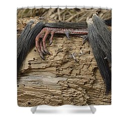 Spring Feathers Shower Curtain by Randy Bodkins