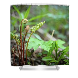 Shower Curtain featuring the photograph Spring Ferns by Alex Blondeau