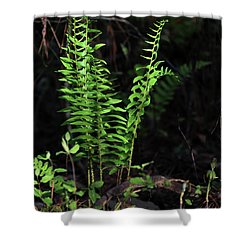Shower Curtain featuring the photograph Spring Ferns by Skip Willits