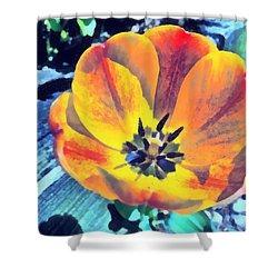 Shower Curtain featuring the photograph Spring Flower Bloom by Derek Gedney