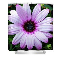 Spring Flower Shower Curtain by Karen Stahlros