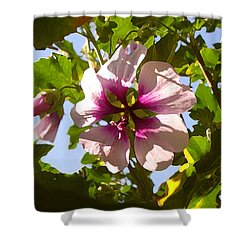 Spring Flower Peeking Out Shower Curtain by Amy Vangsgard