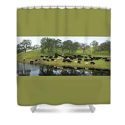 Spring Gather Shower Curtain