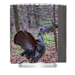 Shower Curtain featuring the photograph Spring Gobbler by Bill Wakeley