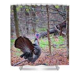 Shower Curtain featuring the photograph Spring Gobbler Square by Bill Wakeley
