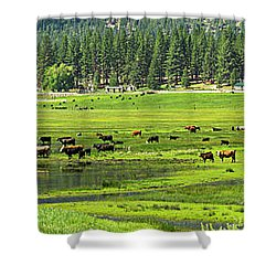 Spring Grazing Shower Curtain