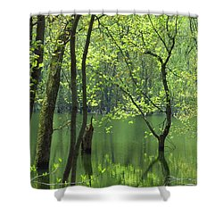 Spring Green  Shower Curtain by Lori Frisch