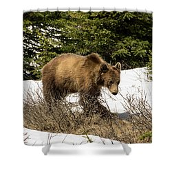 Spring Grizzly Shower Curtain
